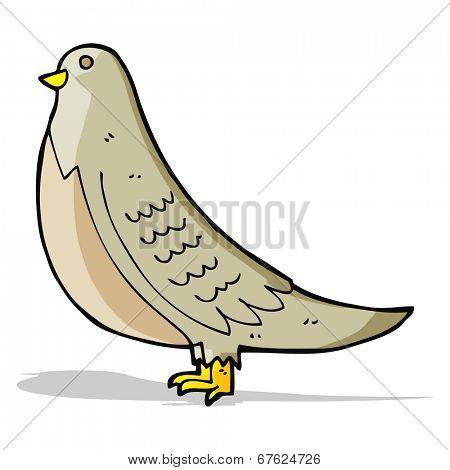 cartoon common bird