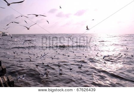 Seagulls With Sunset In The Background