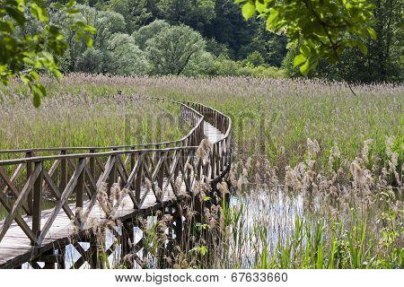 wooden footbridge in the reedbed