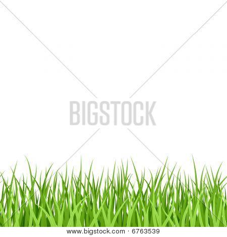 Green Grass. Seamless. Vector.