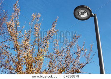 Modern Street Lamp Under A Blue Sky
