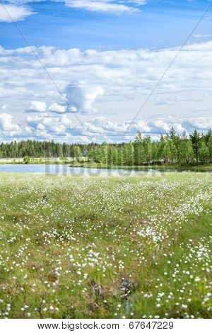 River Bank In Marshy Evergreen Forests Of Karelia