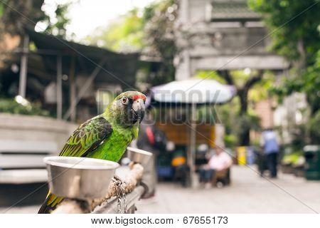 Parrot stand at the bird street, Hong Kong, Asia.