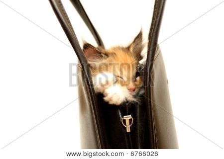 Kitten In Handbag Isolated On White