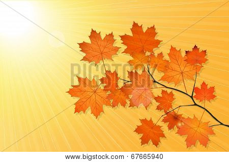 Autumn Scenery With Maple Tree