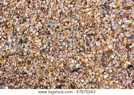 Shells on a beach background