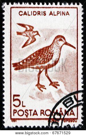 Postage Stamp Romania 1991 Dunlin, Wader Bird