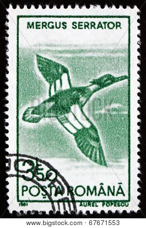Postage Stamp Romania 1991 Red-breasted Merganser, Bird