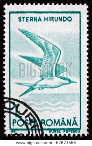 Postage Stamp Romania 1991 Common Tern, Bird