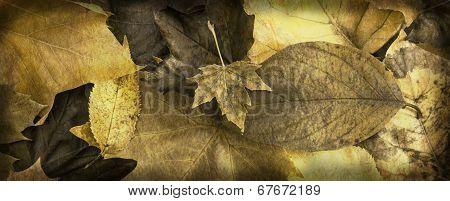 Autumn leafy banner
