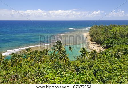 Tropical Beach And Reef From Above