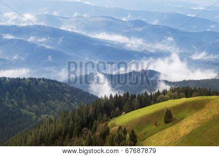 Carpathian Upland Pasture