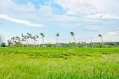 stock photo of windswept  - Landscape behind the Darss beach grassland with the typical windswept trees - JPG