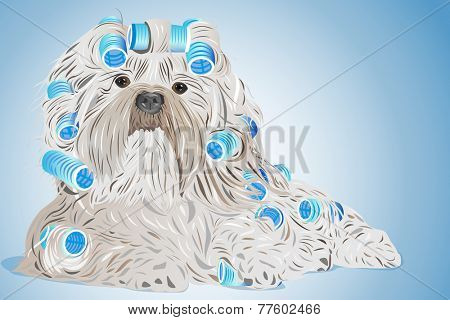 Shih tzu dog with curlers. EPS 10 format.