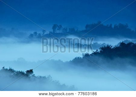 Layer Of Forest During Early Misty Morning