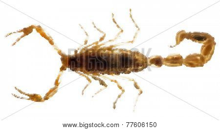 illustration with small golden scorpion from dots isolated on white background