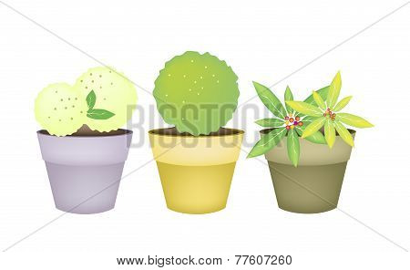 Beautiful Trees and Plants in Terracotta Flower Pots