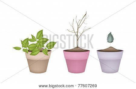 Lovely Green and Dry Plants in Flower Pots