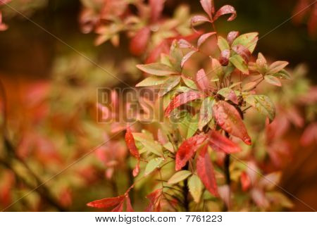 Autumn Leaves With Narrow Depth Of Field