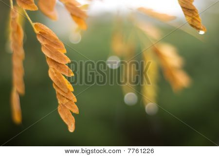 Autumn Leaves On A Rainy Day
