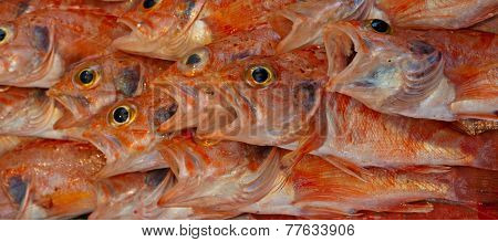 Various Freshly Caught Fish On Sale