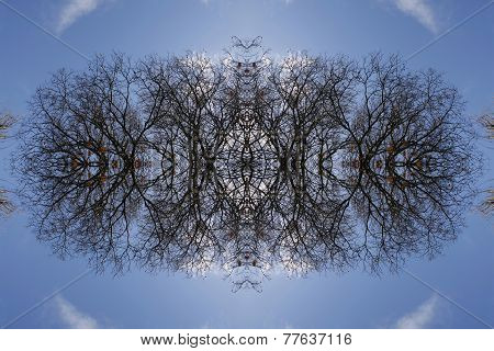 Mirror Image Tree