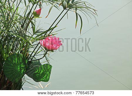 Lotus flower on lake