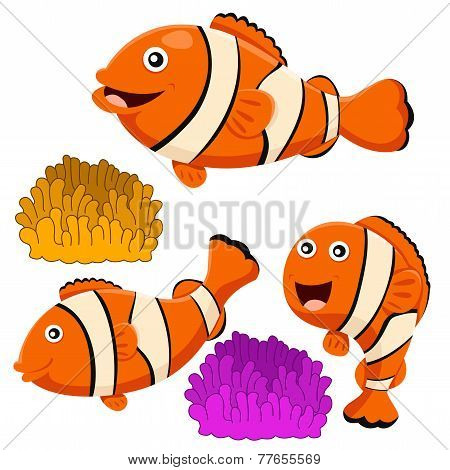 Illustrator of clown fish