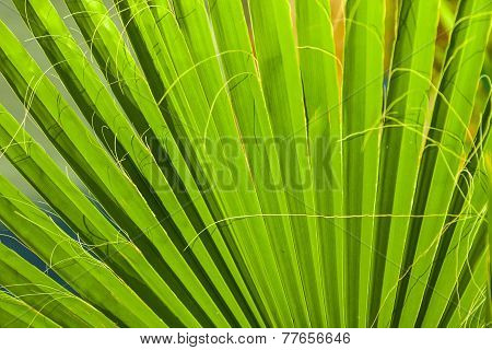 beautiful green palm leaf texture in sunset