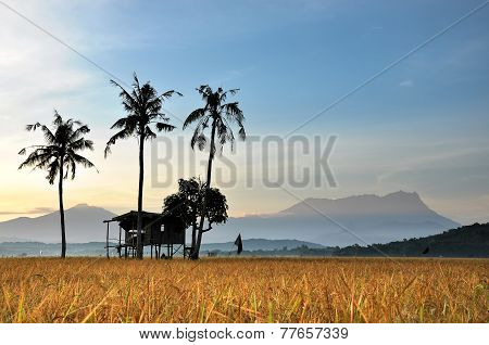 Old Hut, Old Coconut, Old Mountain
