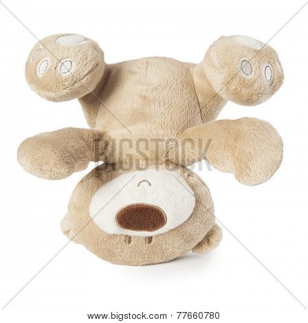 Toy Teddy Isolated
