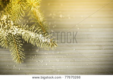 Fur-tree Branch With Snow