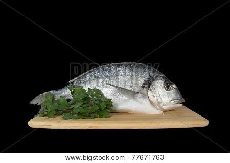 Large Fish Sea Bream Orata Gutted