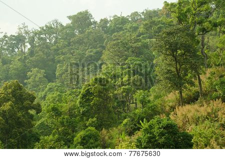 Forest In Thailand