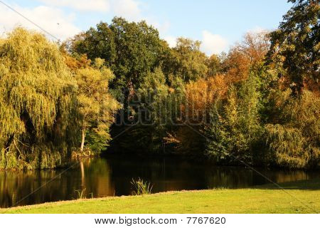 River Trees And Sunlight During Fall