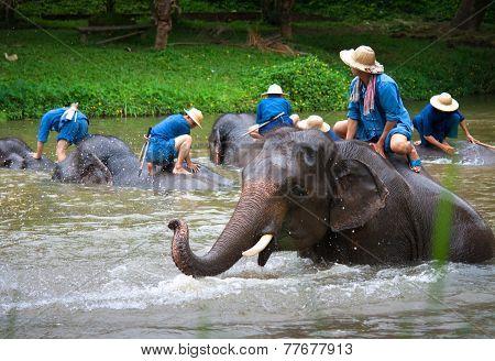 Lampang, Thailand - Mar. 26: Daily Elephants Bath At The Thai Elephant Conservation Center (tecc), M
