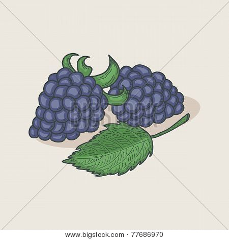 Blackberries And Leaf Isolated