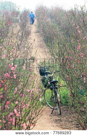 Undefined couples of bicycles on a way-through a peach garden.