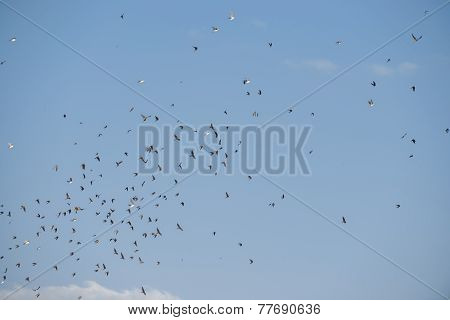 Flying birds in blue sky