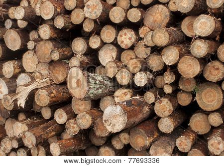 A Pile Of Wood To Burn In The Fire Place