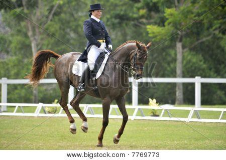 Premier Cup 2010 Dressage Equestrian