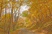 picture of backbone  - Rural Road on a Fall Day in Backbone State Park in Iowa  - JPG
