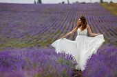 stock photo of lavender field  - Young bride in wedding dress in the outdoors in a field of blossoming Lavender in the summer - JPG