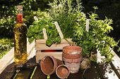 image of flower pot  - herbs and herbs in oil with flower pots in a garden  - JPG