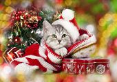 picture of puss  - kitten christmas wearing santa hat - JPG