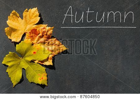 Colorful Leaves Frame Text Autumn Stone