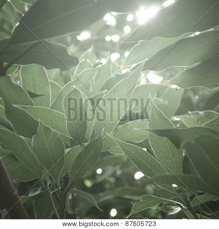 Muted green color leaves against sunlight. An abstract nature background.