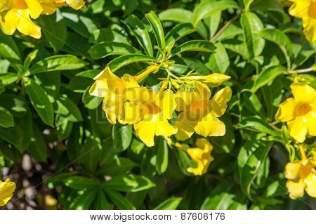 Yellow Flowers On Green Background