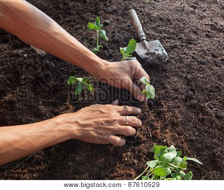 People Planting Young Tree On Dirt Soil With Gardening Tool Use For People Activities And Save Natur