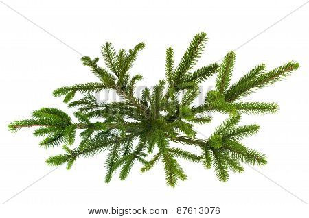 Green Christmas Tree Isolated On White